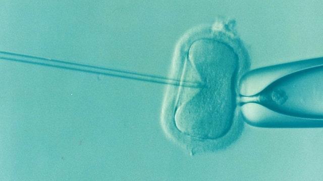 icsi injection d'un spermatozoîde dans un ovocyte